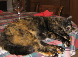 Merit - The Grande Dame of the Cat's Meow