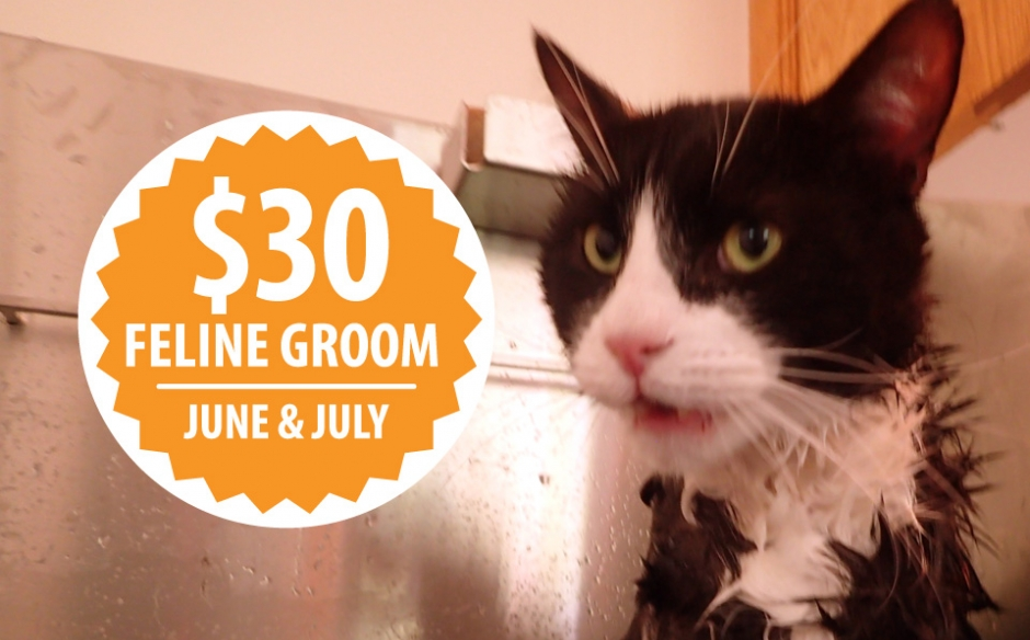 Laws Fundraiser: $30 Feline Groom – June & July